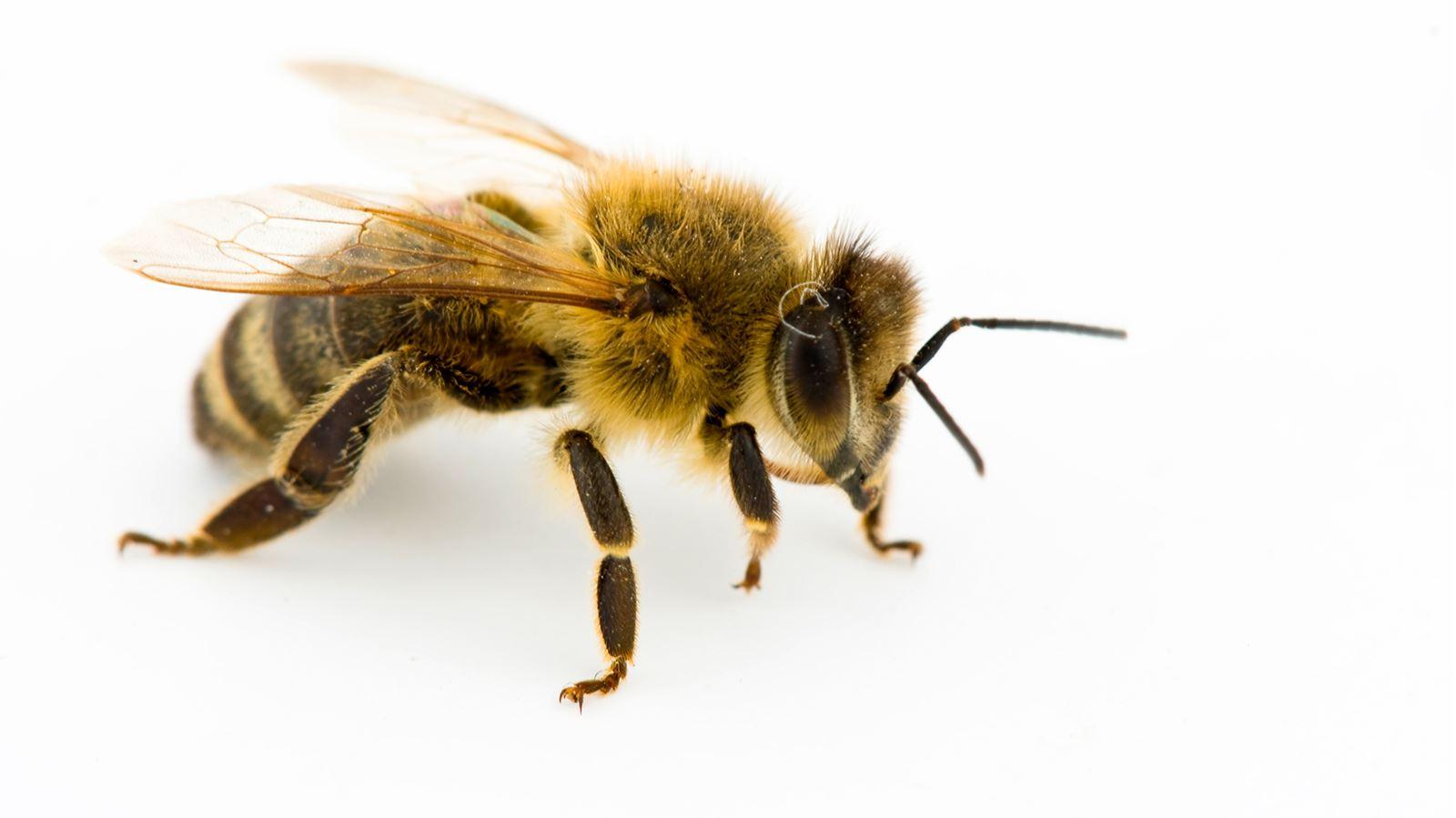 TVBA - Bee Safe
